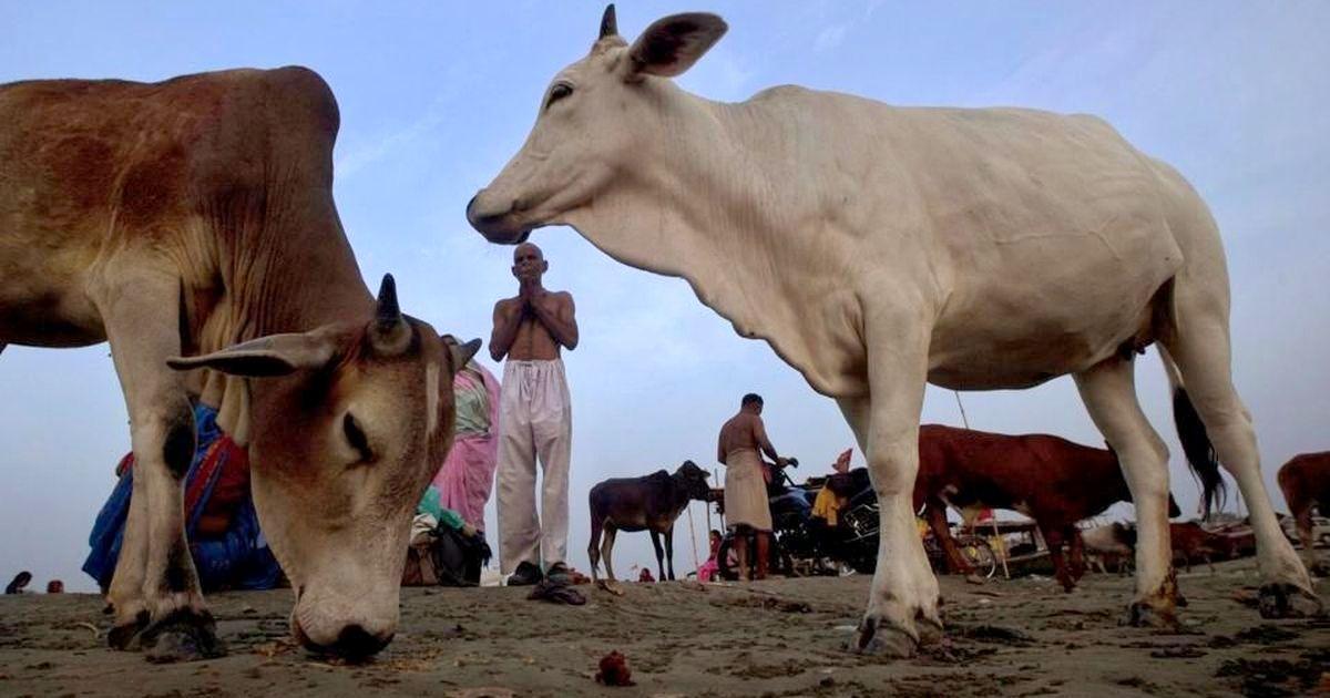 गाय ऑक्सीजन छोड़ती है, उसे राष्ट्रमाता घोषित किया जाए:उत्तराखंड पशुपालन मंत्री