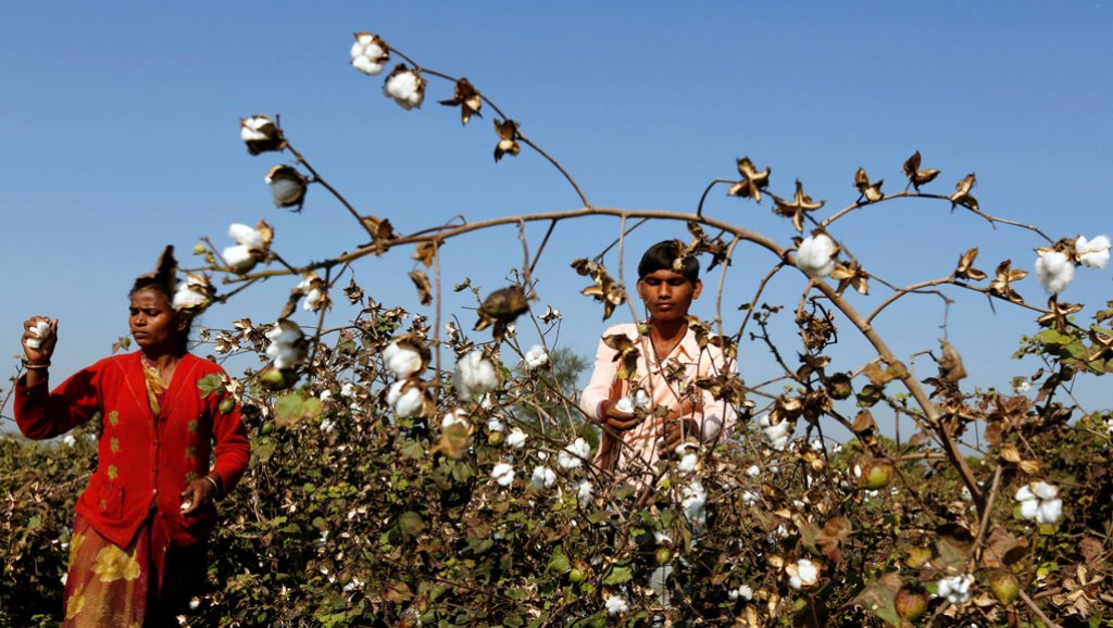 Cotton Farmers Reuters
