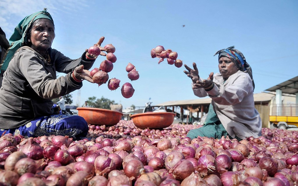 Chikmagalur: Labours sort onions in Chikmagalur, Karnataka, Saturday, Dec. 7, 2019. Onion prices continue to soar across the country. (PTI Photo) (PTI12_7_2019_000025B)