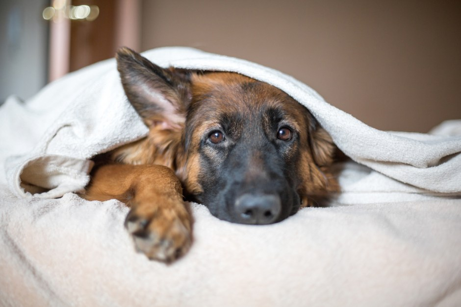 What My Dog's Depression Taught Me About Love
