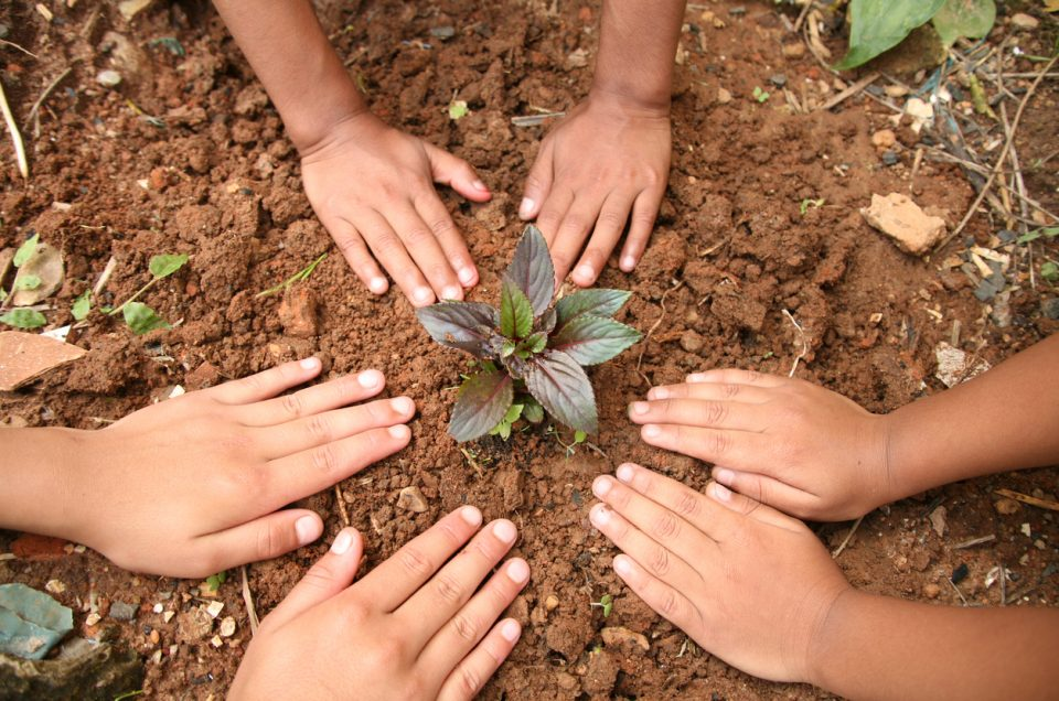 Three unrecognizable children plants a tiny seedling tree or plant in a community garden or park area.  Three sets of hands pat the dirt around the plant.   Various concepts: environmental conservation, go green, Earth Day, gardening, organic agriculture.
