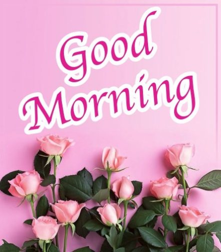 beautiful-good-morning-fresh-pink-rose-flowers-wallpaper-wishing-greeting-e-cards-pictures-Images-pics-photo-for-sharing-on-instagram-stories