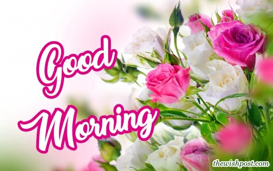 beautiful-good-morning-with-fresh-white-pink-rose-flowers-wallpaper-wishing-greeting-e-cards-pictures-Images-pics-photo-for-friends-free-download