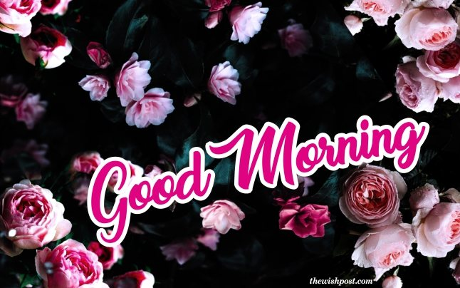 beautiful-good-morning-with-white-pink-rose-flowers-wallpaper-greeting-e-cards-pictures-Images-pics-photo-for-friends-free-download