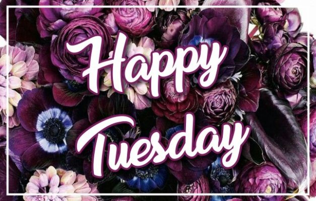 beautiful-happy-tuesday-images-flowers-hd-pics-wallpaper-wishes-greetings-wishing-pictures-free-download
