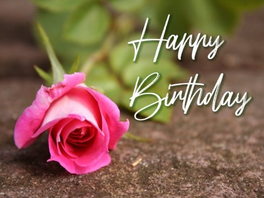 beautiful-love-happy-birthday-rose-flower-wishing-greetings-photos-pictures-wishes-pics-wallpapers-images
