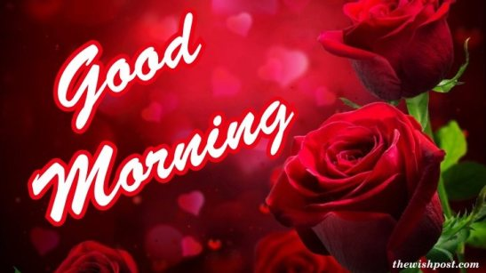 beautiful-lovely-good-morning-fresh-red-rose-flowers-wallpaper-wishing-e-greeting-cards-pictures-Images-pics-photo-for-love-whatsapp-facebook-status-free-download