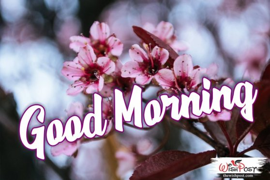 best-good-morning-wishing-pictures-with-flowers-hd-pics-wishes-wallpapers-images-free-download