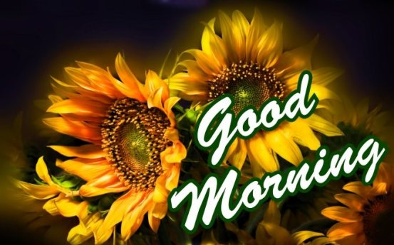 best-good-morning-with-yellow-fresh-sunflower-wishing-hd-wallpaper-greeting-e-cards-pictures-Images-pics-photo-wishes-for-sharing-facebook-post-free-download