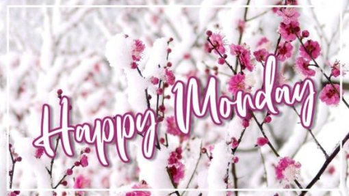 best-happy-monday-flowers-images-greetings-pics-wishes-wishing-pictures-wallpaper-for-instagram