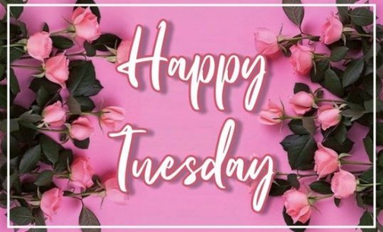 best-happy-tuesday-flowers-greetings-images-wishes-wishing-pictures-free-download-for-facebook