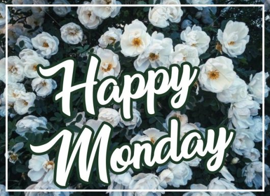 happy-monday-green-pictures-wishes-greetings-images-wallpapers-wishing-free-download