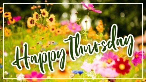 happy-thursday-flowers-wallpapers-images-pictures-wishes-greetings-wishing-free-download-for-facebook-instagram-post