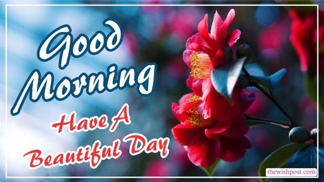 best-good-morning-have-a-beautiful-day-red-flower-images-pictures-wishing-greetings-wallpapers-for-friends-free-download