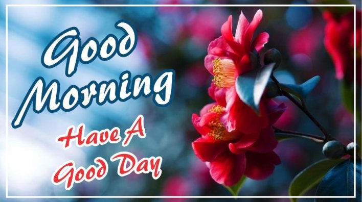 best-good-morning-have-a-good-day-red-flower-images-pictures-wishing-greetings-wallpapers-for-friends-free-download