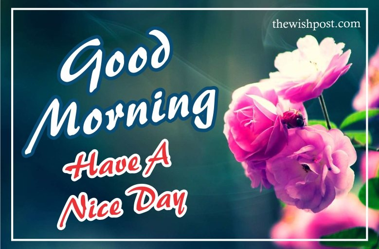 fabulous-good-morning-have-a-nice-day-pink-green-flower-hd-images-cards-wishes-wallpapers-wishing-pics-greeting-for-facebook-status-friends