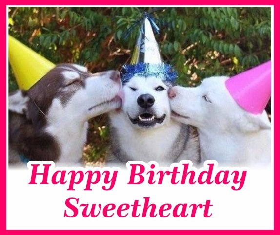 funny-happy-birthday-dog-sweetheart-hd-images-wishes-e-greetings-cards-for-funny-girl-friends-free-download