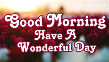 special-lovely-good-morning-have-a-wonderful-day-with-flowers-love-images-wallpaper-wishing-pics-greeting-cards-pictures-for-friends-love