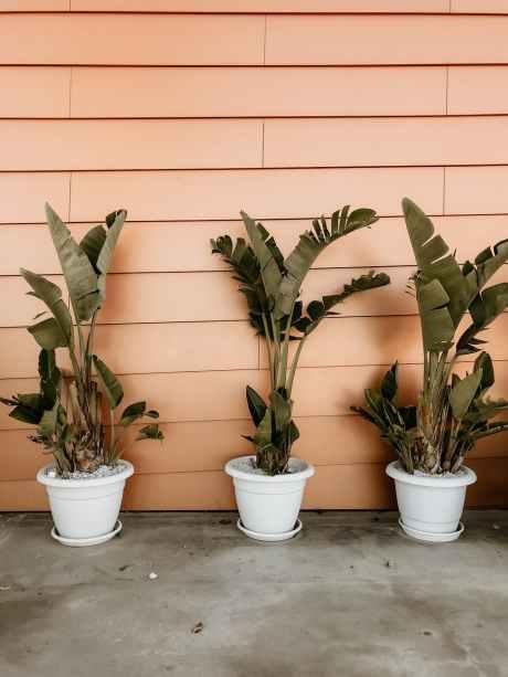 गृह दोष खत्म करने हो तो ये पौधे लगाएं घर में