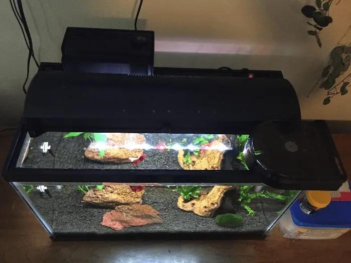 Fish Mate 14 Automatic Fish Feeder on Betta Tank