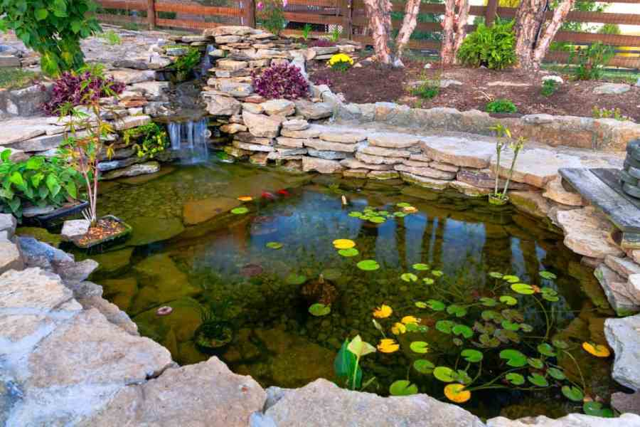 Koi Pond Filter in backyard koi pond