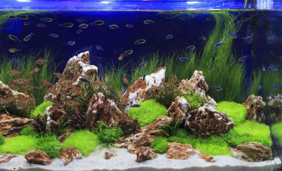 large fish tank with fish and plants