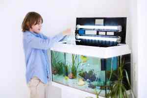 Child Looking into aquarium with hob filter and lights
