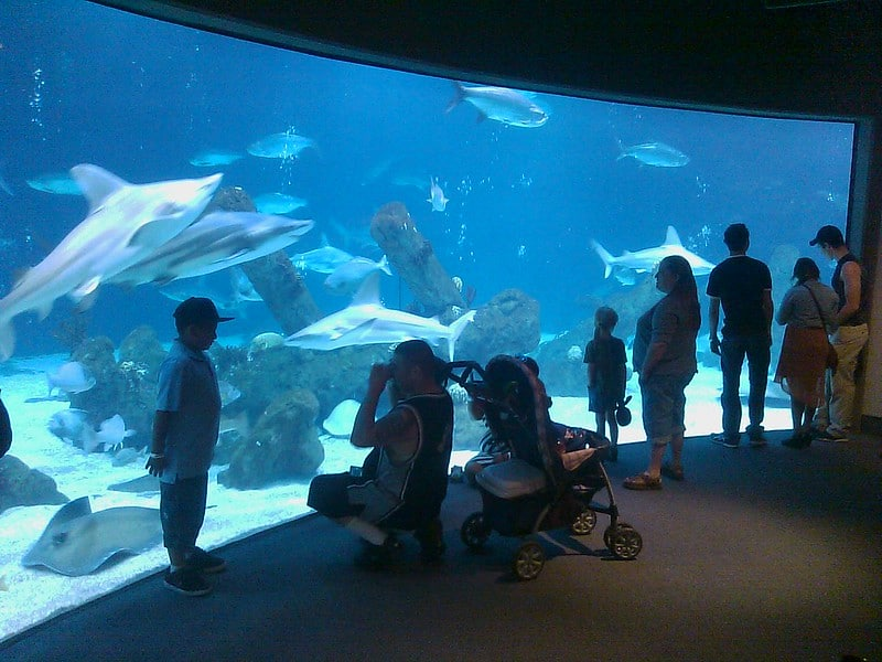 people standing in front of large tropical aquarium at the New Mexico BioPark