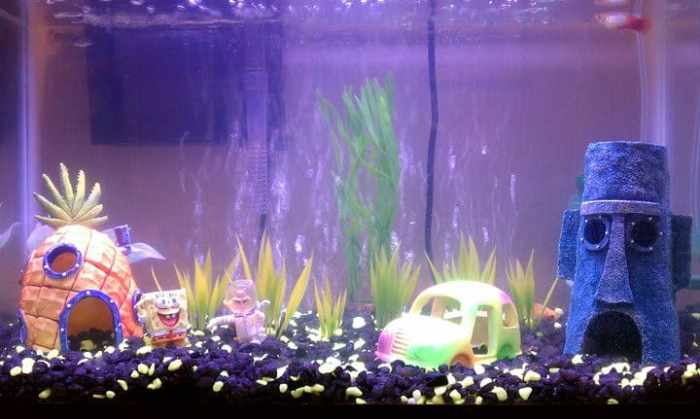 Home aquarium decorated with spongebob decor