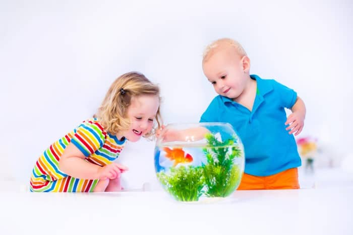 2 young children smiling at goldfish