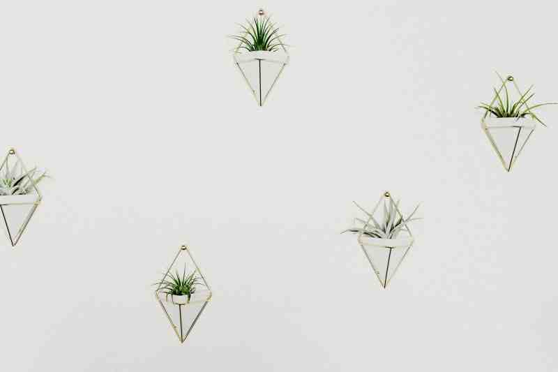 white wall featuring plants in geometric planters