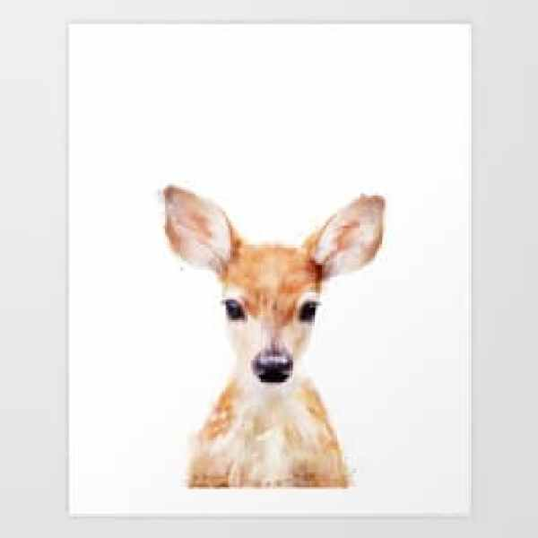 picture of a little deer in front of a white background