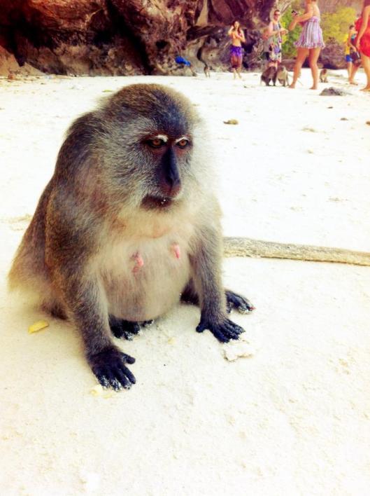 Sad Monkey Beach