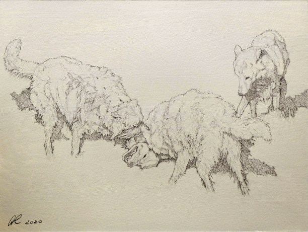 By Aaron Romine (France) , Graphite on Gessoed Paper, Artwork for The Wolf Intelligencer
