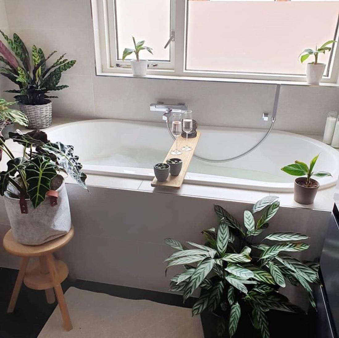 Decorate bathroom with plants