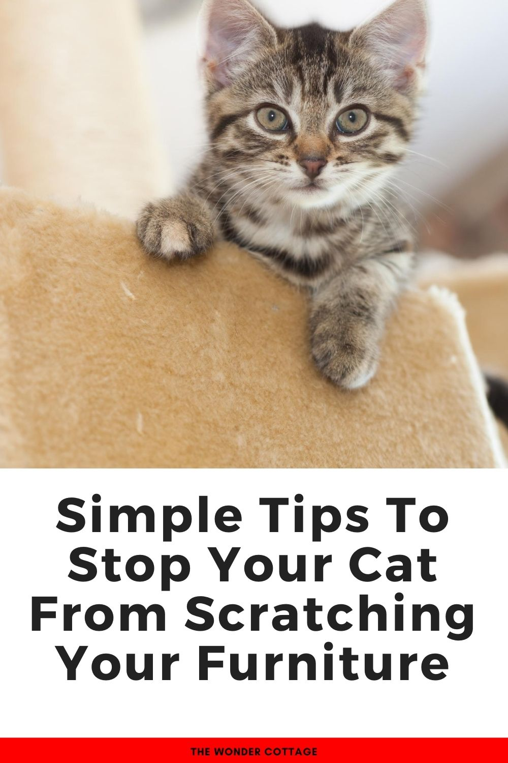 Simple tips to stop your cat from scratching your furniture