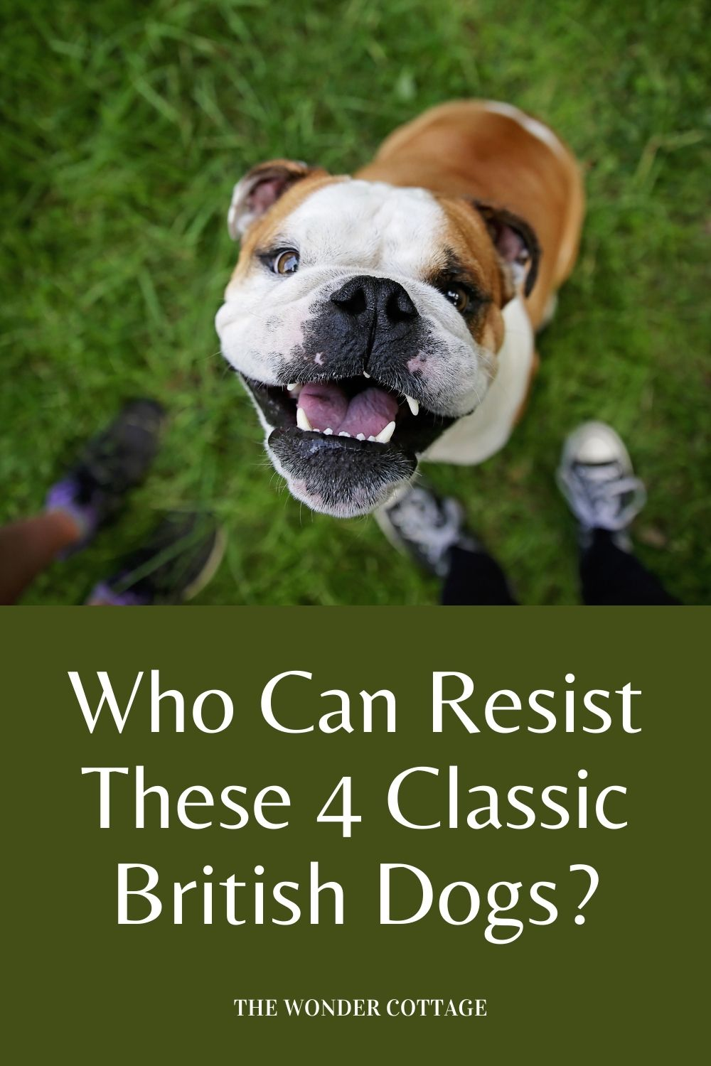 who can resist these 4 classic British dogs