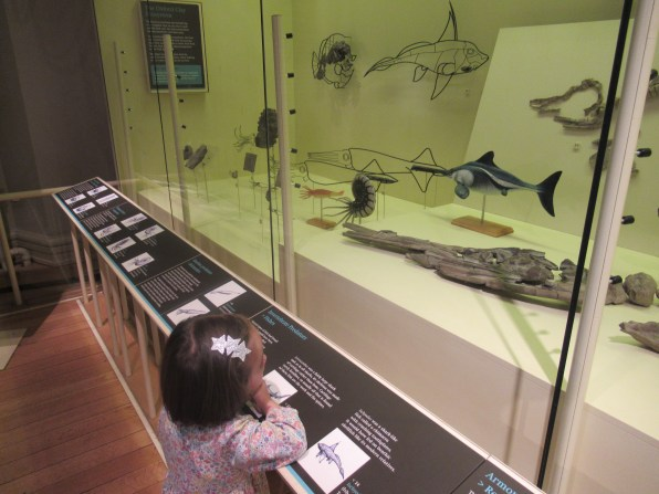 Captivated by the ancient sea creatures in the dinosaur gallery