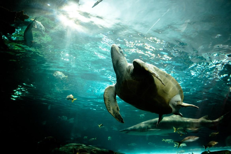 Toronto Aquarium