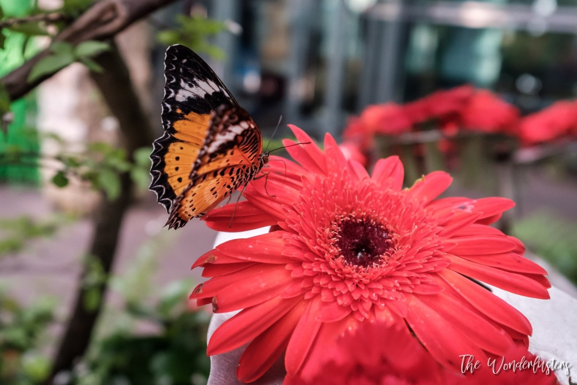 Changi Airport Butterfly Garden