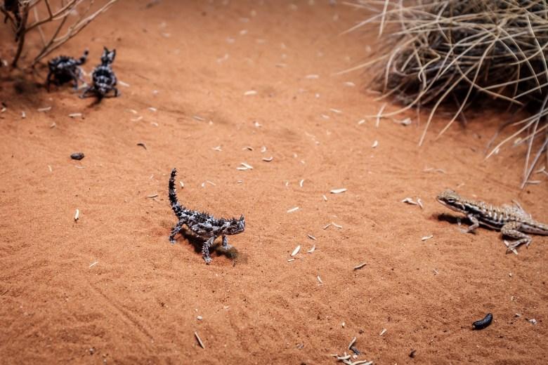 Australia Alice Springs 07