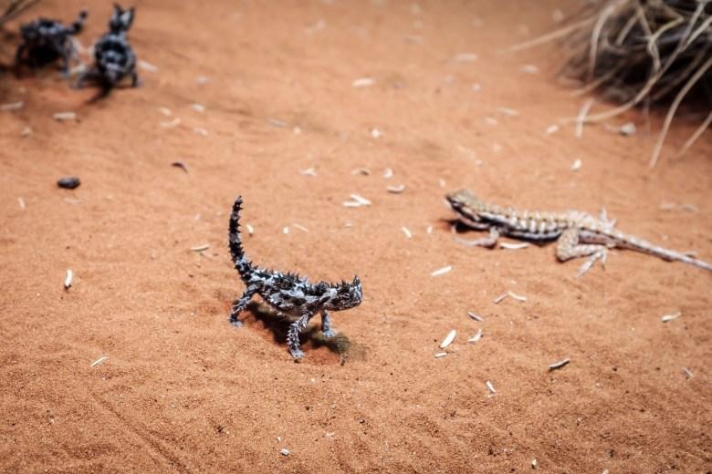 Australia Alice Springs 08