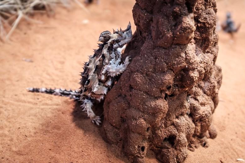 Australia Alice Springs 09