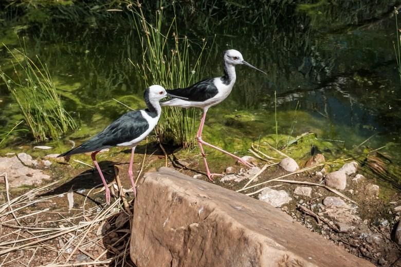 Australia Alice Springs 27