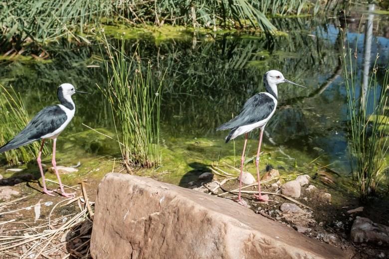 Australia Alice Springs 28