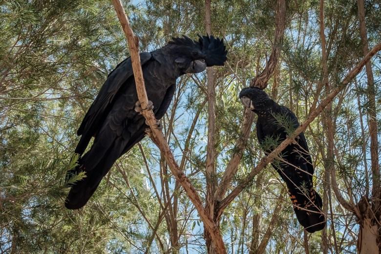 Australia Alice Springs 31