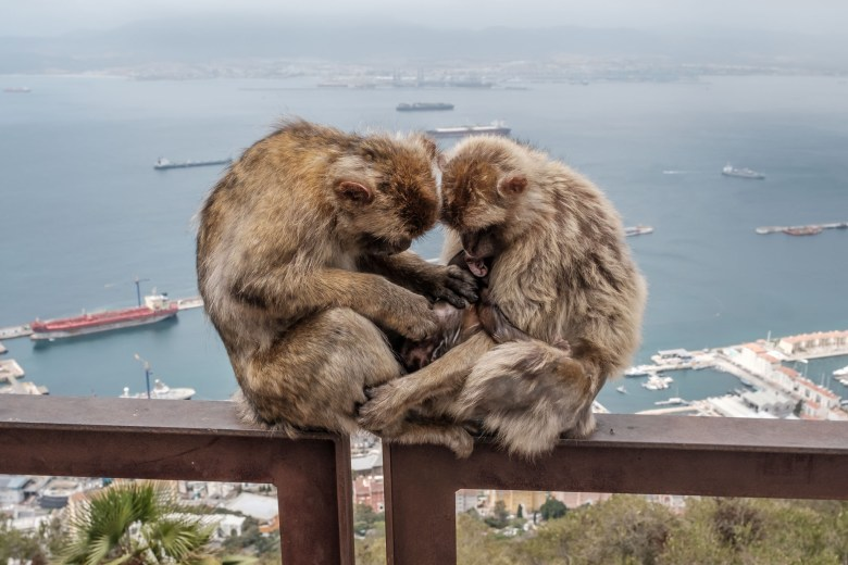 Gibraltar Rock 23