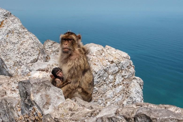 Gibraltar Rock 34