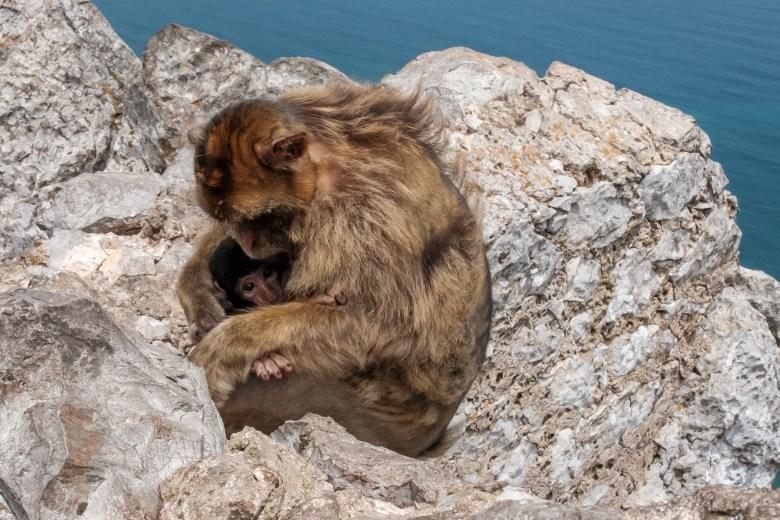 Gibraltar Rock 35