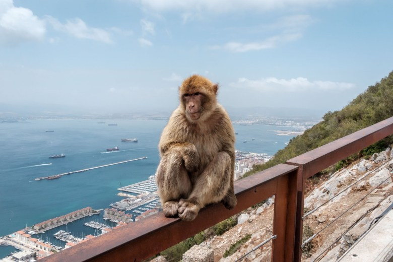 Gibraltar Rock 36